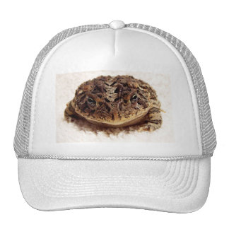 Toad frog close up photograph on white background hats