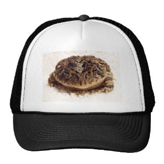 Toad frog close up photograph on white background trucker hats