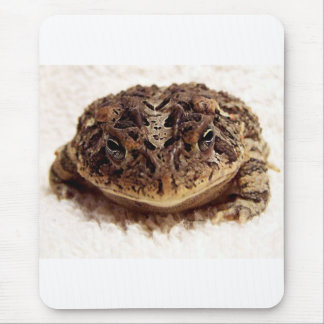Toad frog close up photograph on white background mouse pad