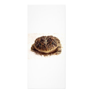 Toad frog close up photograph on white background rack card