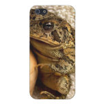 Toad frog holding miniature udu photograph iPhone 5 cover