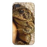 Toad frog holding miniature udu photograph iPhone 4 covers