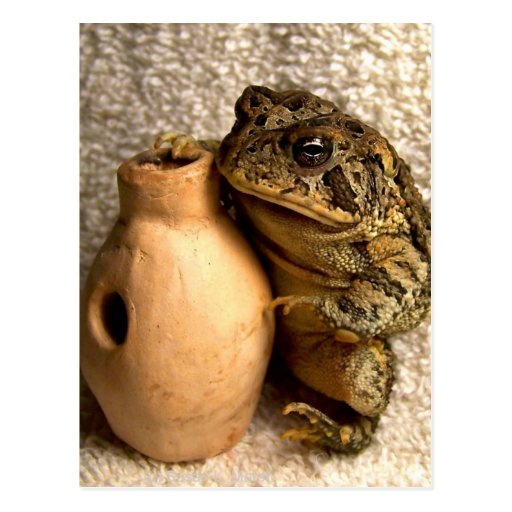 Toad frog holding miniature udu photograph postcard