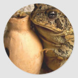 Toad frog holding miniature udu photograph classic round sticker