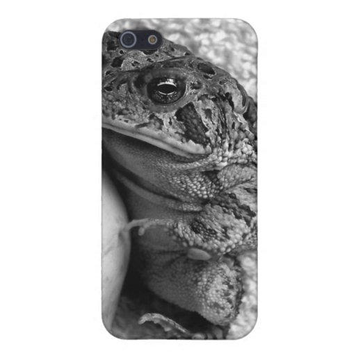 Toad frog holding udu percussion photograph iPhone 5 cover