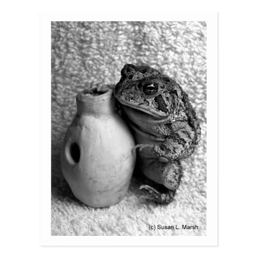 Toad frog holding udu percussion photograph postcard