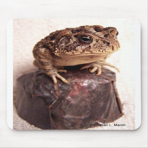 Toad frog on hand hammered copper cup photo mousepad