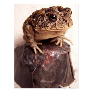 Toad frog on hand hammered copper cup photo postcard
