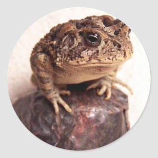 Toad frog on hand hammered copper cup photo sticker
