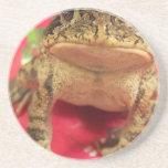 Toad frog standing up against bougainvillea back beverage coaster