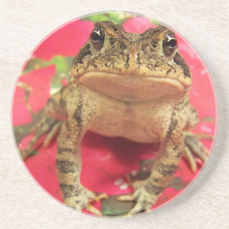 Toad frog standing up against bougainvillea back drink coaster
