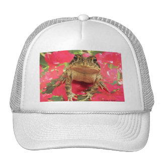 Toad frog standing up against bougainvillea back trucker hats