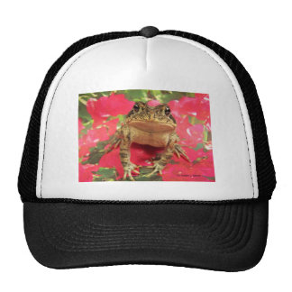 Toad frog standing up against bougainvillea back hat