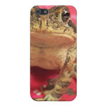 Toad frog standing up against bougainvillea back covers for iPhone 5