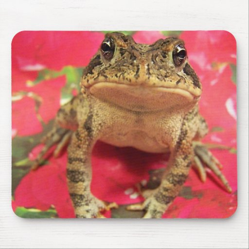 Toad frog standing up against bougainvillea back mousepad