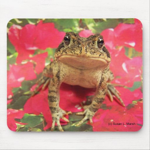 Toad frog standing up against bougainvillea back mouse pads