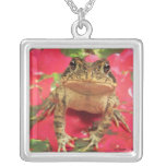 Toad frog standing up against bougainvillea back jewelry
