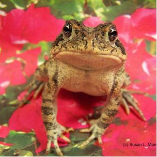 Toad frog standing up against bougainvillea back photo sculpture