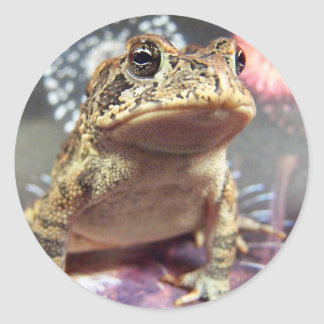 Toad frog standing up against firework background stickers