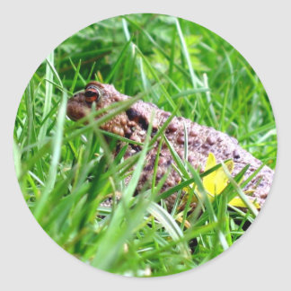Toad in the grass classic round sticker