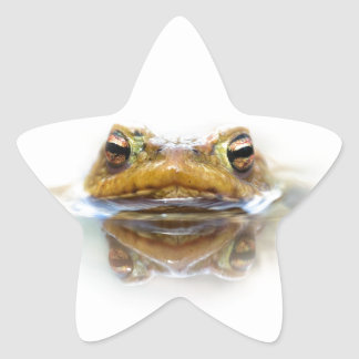 Toad in water sticker