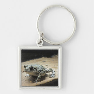 Toad Keychain