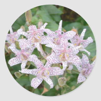 Toad Lilly Blossoms Tom Wurl Classic Round Sticker