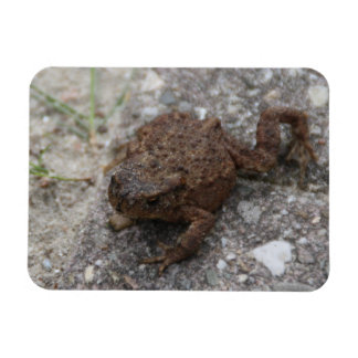 Toad Magnet