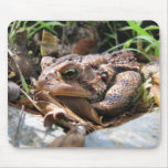 Toad Mousepads