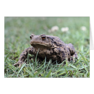 Toad notecard