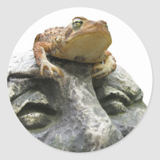 Toad on Garden Happy Face Rock Classic Round Sticker