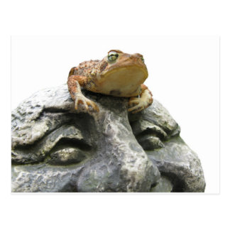 Toad on Garden Happy Face Rock Postcard