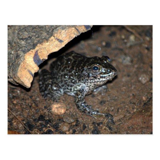 toad postcard
