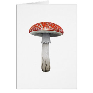 Toad Stool Card