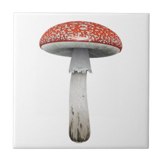 Toad Stool Small Square Tile