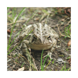 Toad, Wrapped Canvas Print.