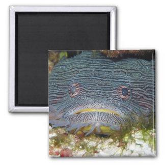 Toadfish Looking At Us Fridge Magnet