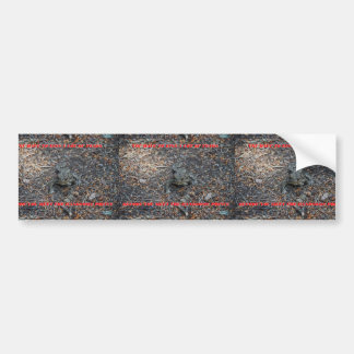 Toads Car Bumper Sticker