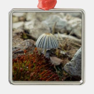 Toadstool minúsculo adorno navideño cuadrado de metal