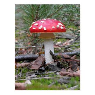 Toadstool Mushroom Postcard