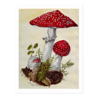 Toadstool Post Card