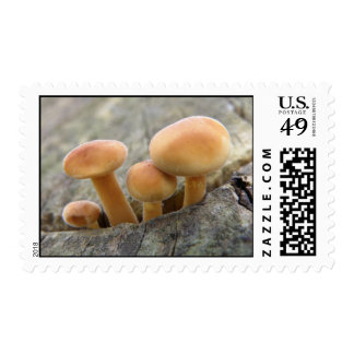 Toadstools on a Tree Trunk Postage Stamp