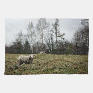 Toalla de cocina sucia de las ovejas