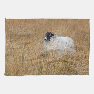 Toalla de la fotografía de las ovejas de la