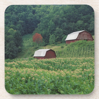Tobacco crop and pair of red tobacco barns near coaster