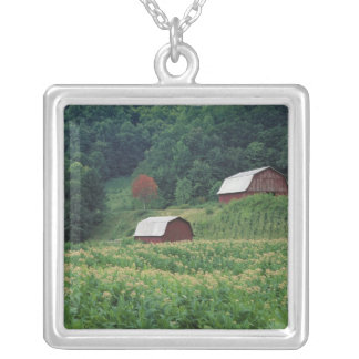 Tobacco crop and pair of red tobacco barns near silver plated necklace