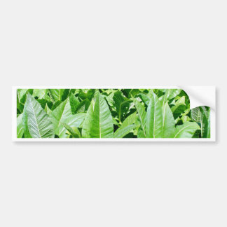 Tobacco field bumper sticker