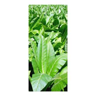 Tobacco field rack card template