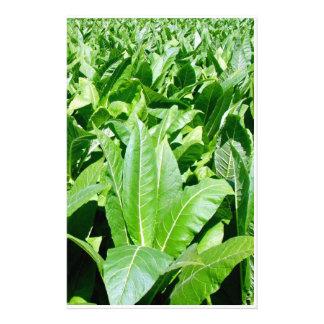 Tobacco field stationery
