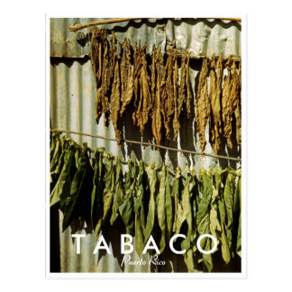 Tobacco Leaves, History, Puerto Rico Postcard